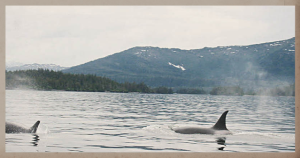 orca glide