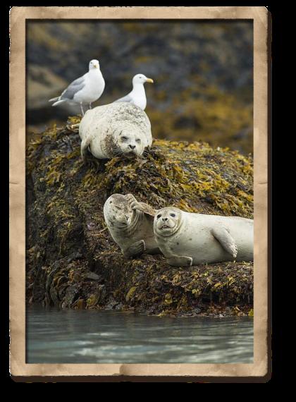 seals sleep