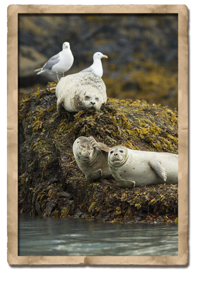 seals sleep